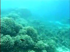 Aqua Fuckfest 2 (Part 1 of 2)