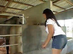 骑亚洲公鸡在马厩里