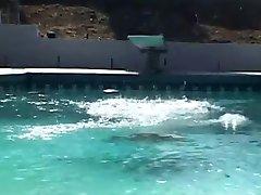 Sativa Rose wordt geneukt door haar zwembad jongens John West en Van Schade
